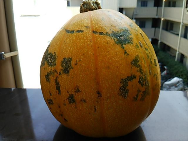 ぼっち村野菜かぼちゃウラ