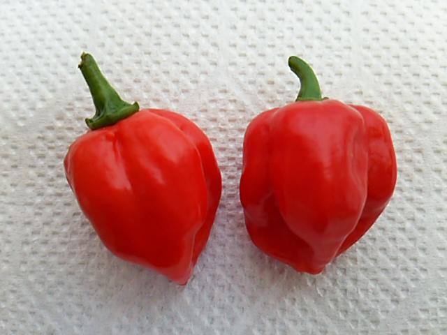 ぼっち村野菜ハバネロ開封
