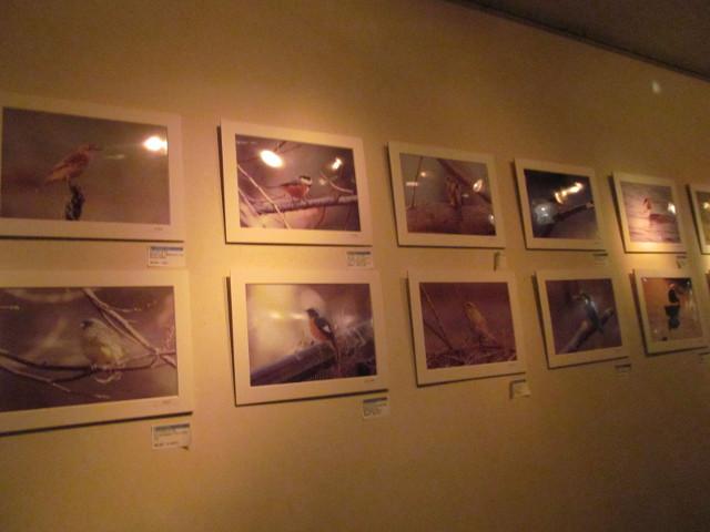 柏MUSIC_SUN2014StudioWUU鳥の写真たち
