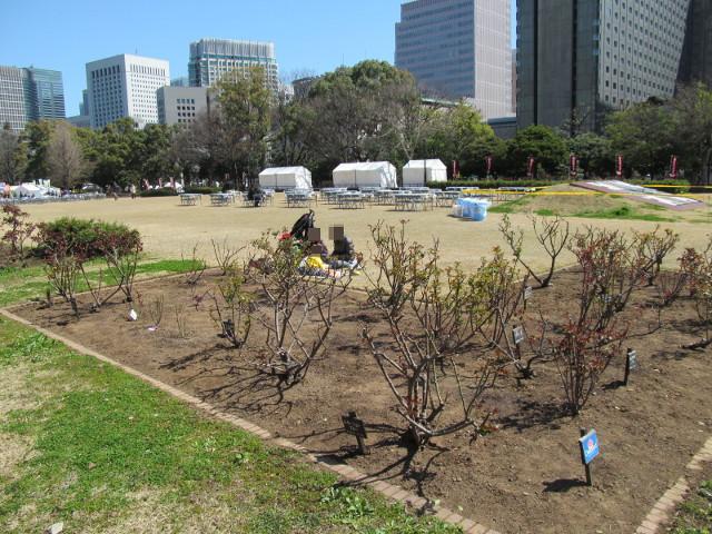にれの木広場側から見た芝生広場