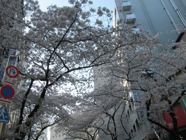 渋谷桜丘あしびなー前から桜を見上げる