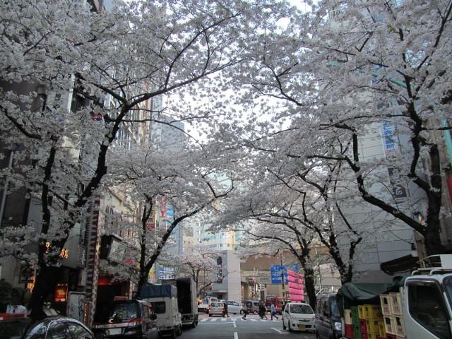 渋谷桜丘あしびなー前から渋谷駅方面の桜を見る