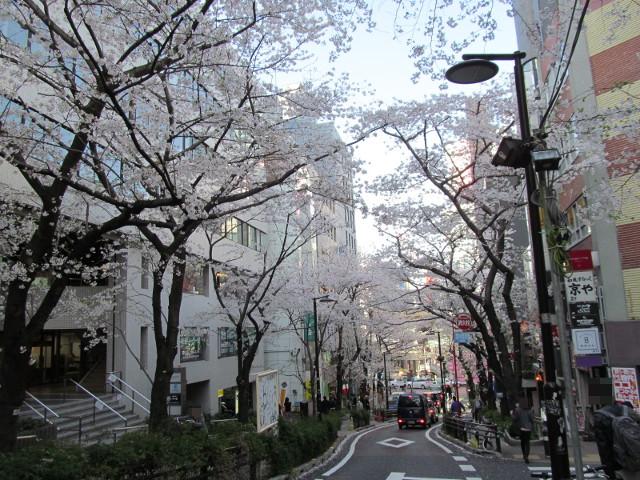 渋谷桜丘さくら通り左側を3分の1からさらに下る
