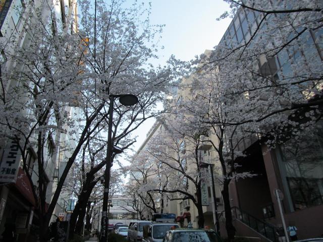 渋谷桜丘さくら通り左側を半分下って空