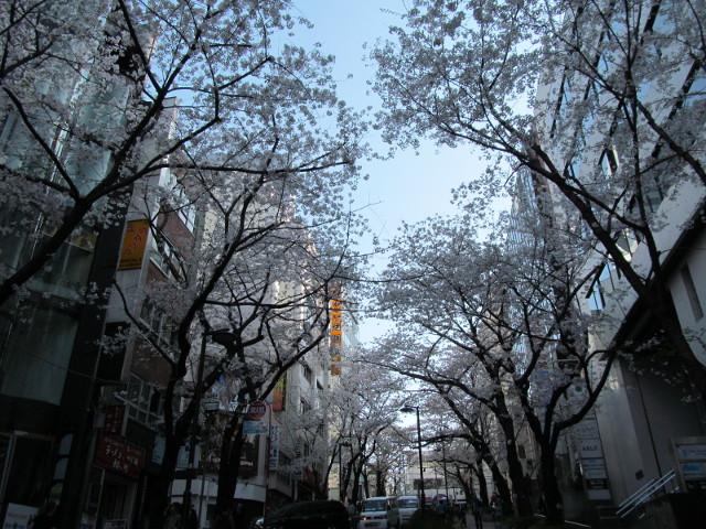 渋谷桜丘さくら通り右側中腹くらいから