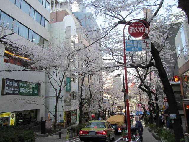 渋谷桜丘さくら通り左側を半分くらい下る