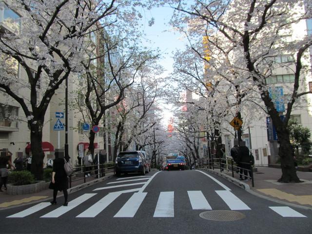 渋谷桜丘さくら通り頂上から下を見る