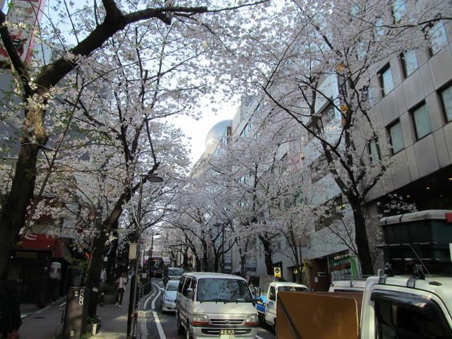 渋谷桜丘さくら通り左側を坂下近くまで下る