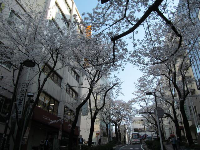 渋谷桜丘さくら通り右側中腹くらい2