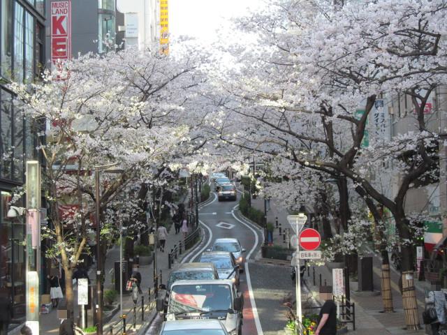 歩道橋から渋谷桜丘さくら通りアップ