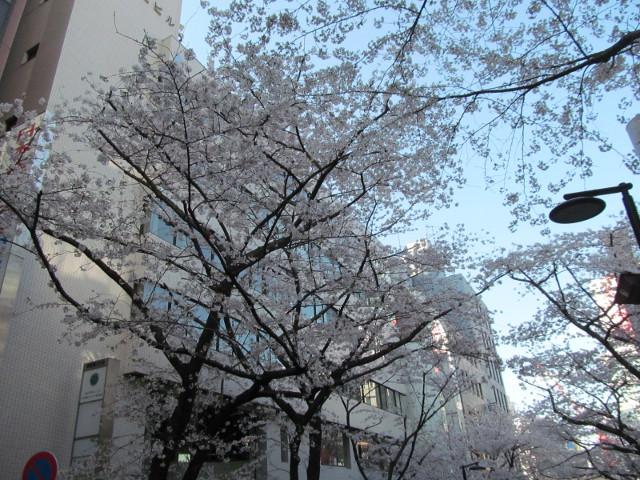 渋谷桜丘さくら通り左側を3分の1くらい下って空