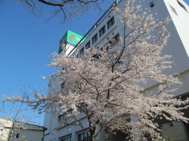 天祖神社の満開の桜と世田谷信用金庫本店2015