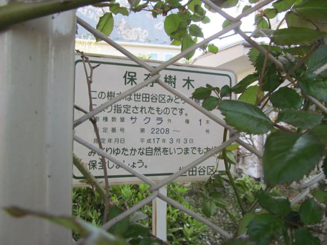 弦巻三丁目の民家の桜は世田谷区の保存樹木