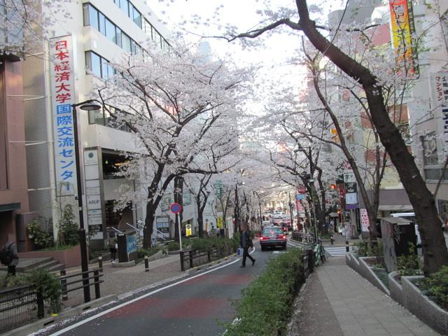 渋谷桜丘さくら通り左側を3分の1くらい下る2