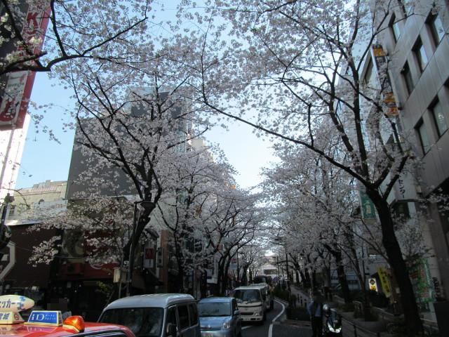 渋谷桜丘さくら通り右側をちょっと上がる