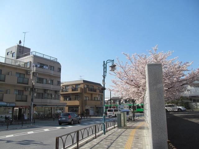 円光院の満開の桜2015その3