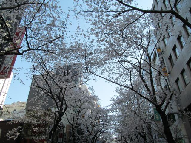 渋谷桜丘さくら通り右側をちょっと上がって空を見る