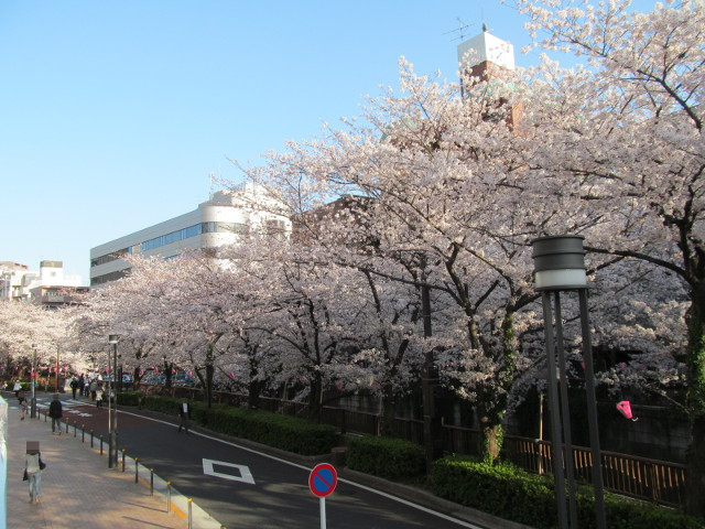目黒川の満開の桜2015目黒天空庭園2階レベル1