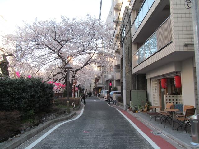 目黒川の満開の桜2015沖縄料理新風5
