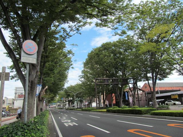 JR前橋駅前のけやき並木