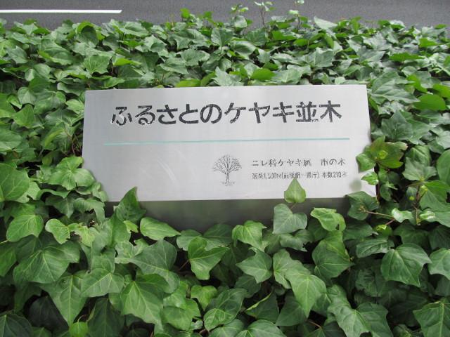 ふるさとのケヤキ並木の標識