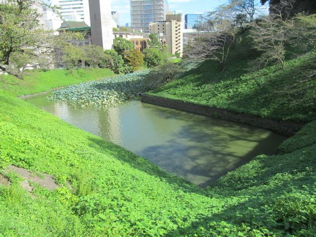 北の丸公園のお堀