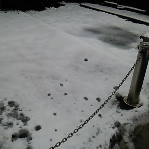 世田谷に雪が降ったので観察20160118サムネイル