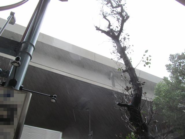 台風9号の中すき家へ向かう20160822
