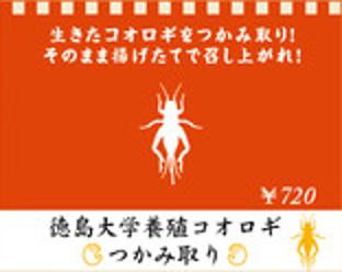米とサーカス_徳島大学養殖コオロギつかみ取り_ヨコ312_20180819