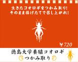 米とサーカス_徳島大学養殖コオロギつかみ取り20180819